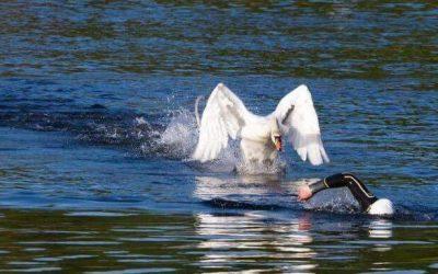 Fin des séances de natation en eau libre